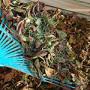 Kompostér patří do každé zahrady