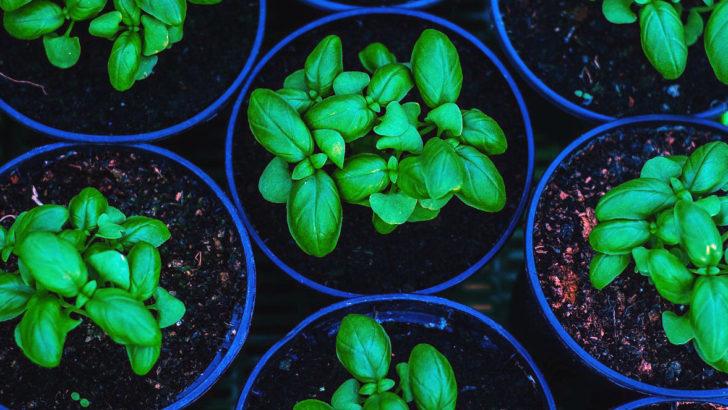Vysáváme a rozmnožujeme bylinky – jak na to