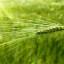 Zelené potraviny – jak prospívají organismu